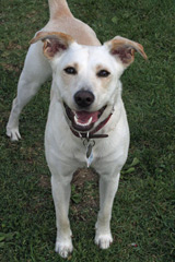 Elena the Wonder Dog likes her chiropractic adjustment