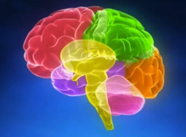 Alzheimer's Disease and Cognitive Decline
