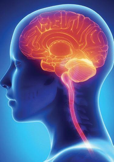 Brain-and-brain-stem-profile.jpg
