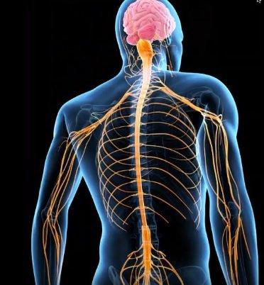 Chiropractic vs Gabapentin